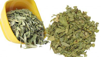 Photo of Sinameki Çayının Faydaları